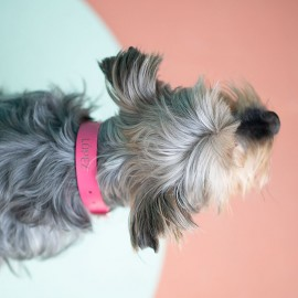 collar perro rosa personalizado