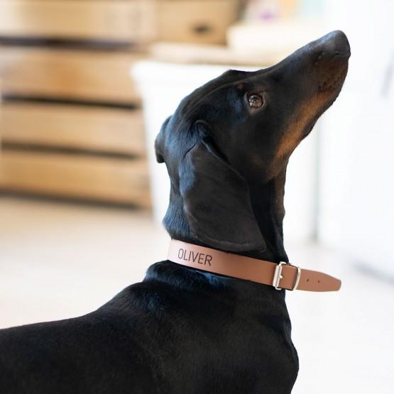 collar personalizado perro marrón