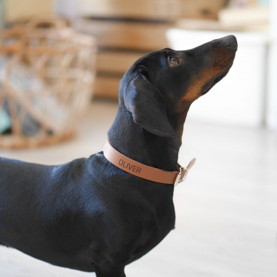 Correa personalizada perro cuero