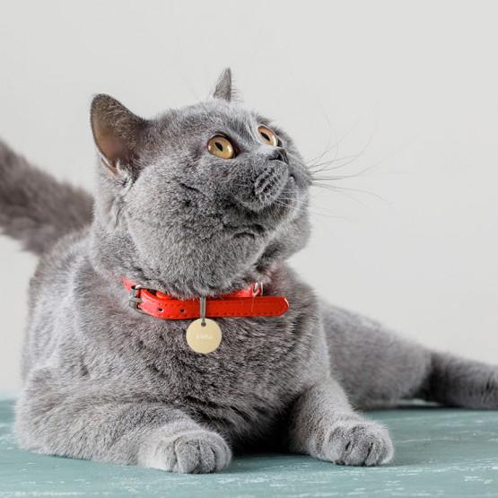 Placa personalizada para gatos