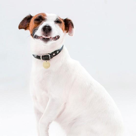 Placa personalizada para perros
