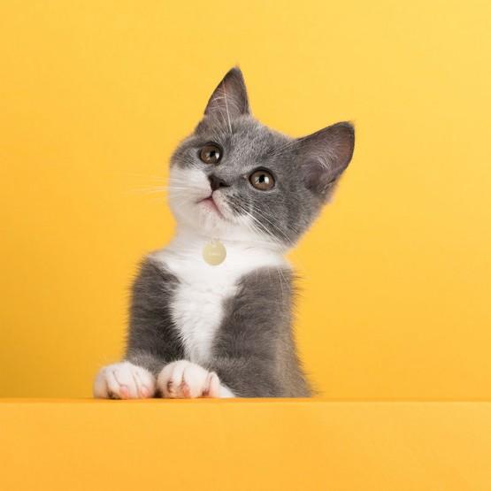 placa con nombre gato