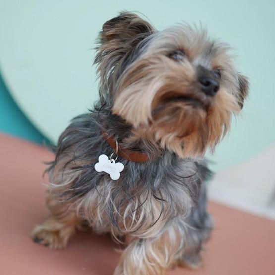 Placa personalizada perro